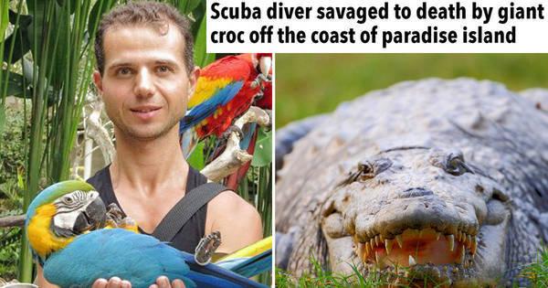 Crocodilo gigante devora turista russo em ilha paradisíaca - Fotos ...