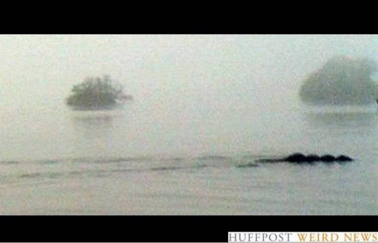 Na Inglaterra, um homem em um caiaque tirou essa foto no Lago Windemere, em 2006. Tom Pickles disse que, de longe, ele pensou que era um cachorro grande, mas quando chegou perto viu que era enorme. Será que era um primo do Monstro do Lago Ness?