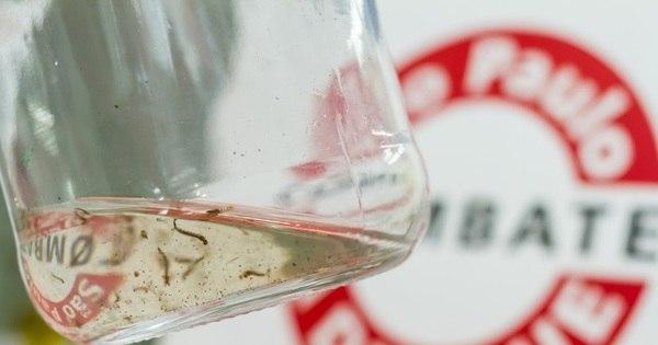 Paraná começa vacinação contra a dengue em 13 de agosto ...