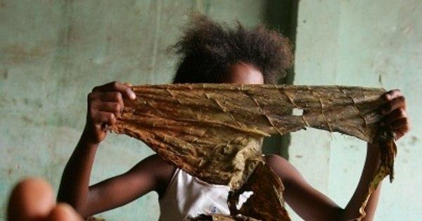 Trabalho infantil matou 187 e deixou mais de 20 mil acidentados ...