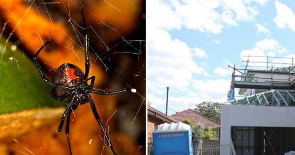 Operário tem o pênis picado por aranha assassina em banheiro ...