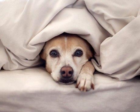 Saiba como cães e gatos são afetados pela mudança climática