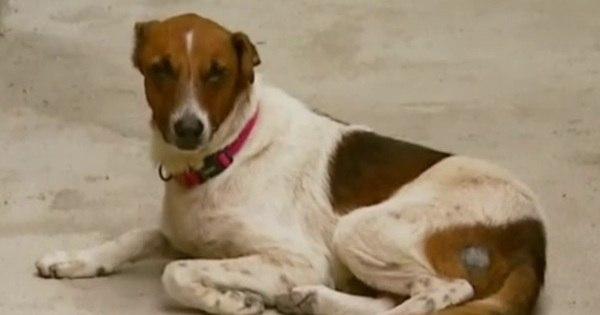 Cão faz vigília todas as noites à espera do dono que morreu - Fotos ...