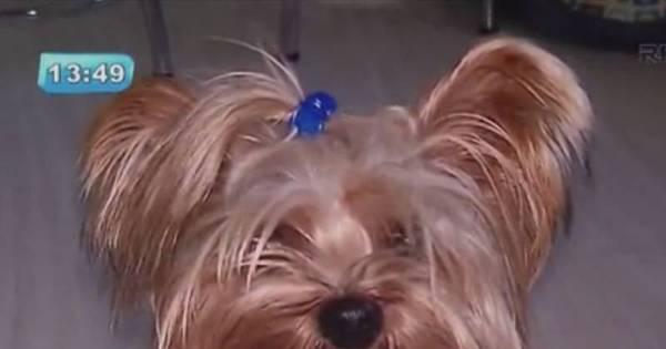 Comerciante ameaçou dona de animal antes de matar cachorro a ...