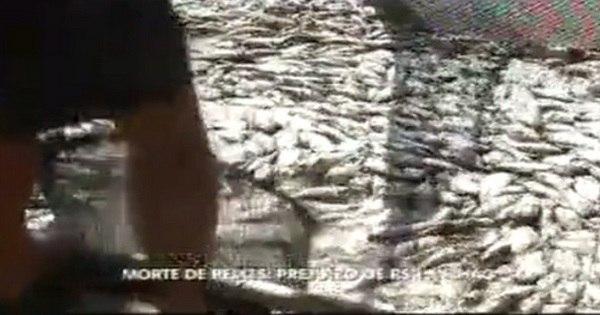 Mistério: Morte de 200 toneladas de peixe em Furnas intriga biólogos