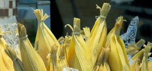 Zapping mostra como é feita a tradicional pamonha de Piracicaba
