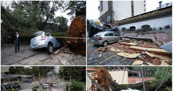 Estragos: após chuva, SP tem mais de 180 árvores caídas e duas ...