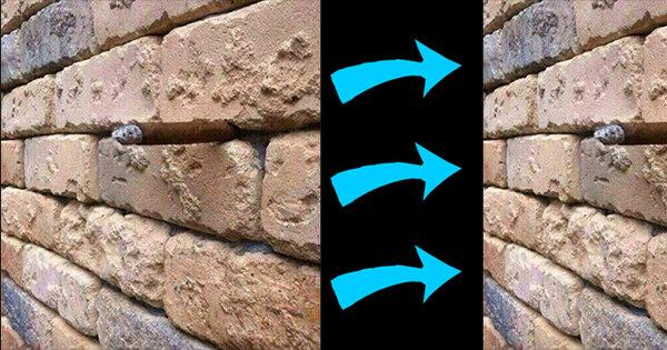 Essa ilusão de óptica neste muro de tijolos vai deixar seu cérebro ...