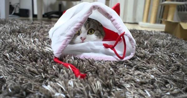 8 gatos que são mais famosos no Facebook do que eu e você juntos!