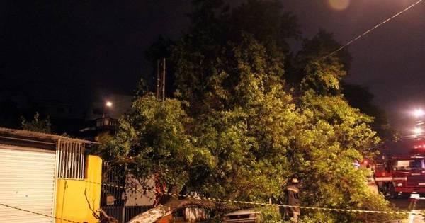 Após chuva, SP tem árvores caídas e tempo fechado - Notícias - R7 ...