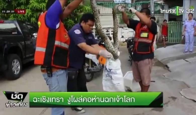 Em seguida, as autoridades chegaram à casa da vítima para tirar a serpente da tubulação