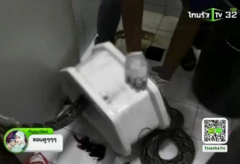 Atthaporn Boonmakchuay, de 38 anos, estava sentado no vaso sanitário de sua casa quando sentiu uma mordida na ponta do seu órgão genital