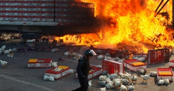 Protesto de professores contra a polícia deixa 6 mortos no México ...