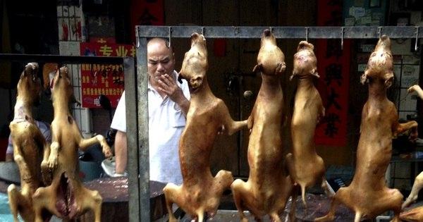 Festival de carne de cachorro começa na China; veja outros países ...