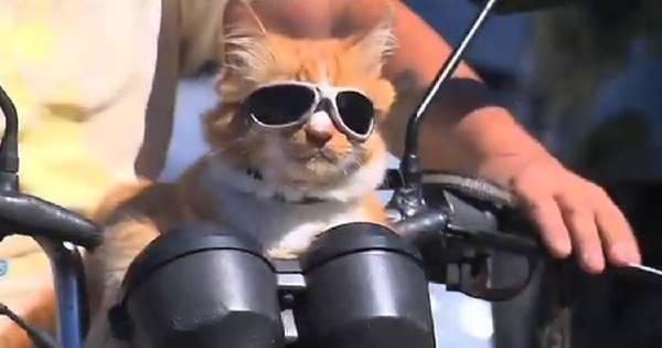 Da Rocinha para o mundo: gato Chiquinho ganha fama internacional