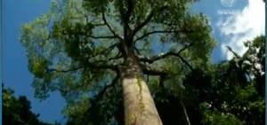 Árvores impressionam pela importância no ecossistema e para a vida humana