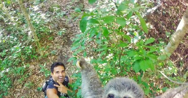 Fotos animais! Selfie com bicho-preguiça bomba nas redes sociais ...