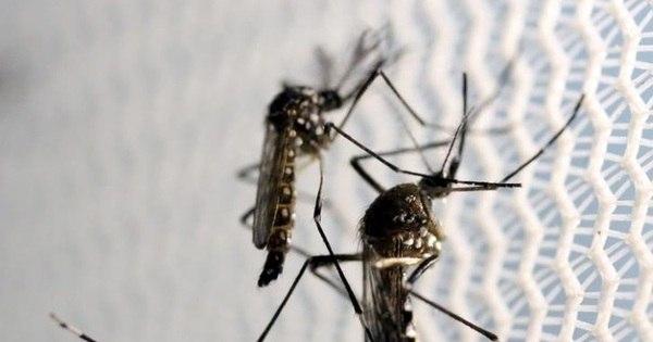 Semelhança genética indica que zika pode ser combatido com ...