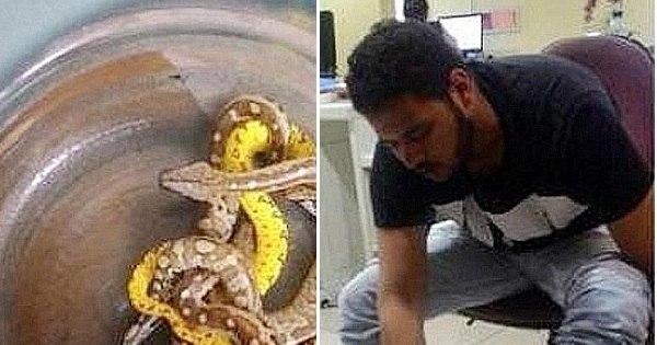 Homem é preso em com 10 cobras nas meias em aeroporto. Veja as...