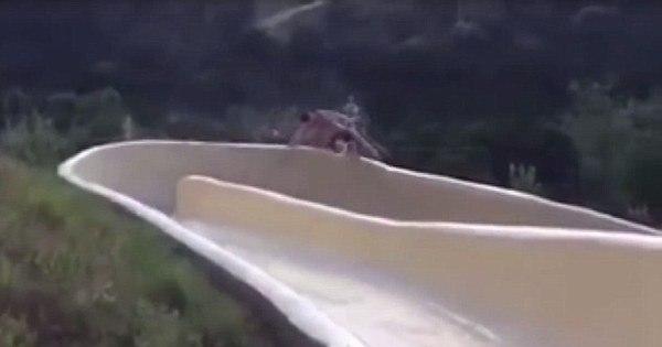 Vídeo: homem fica com um braço e várias costelas quebradas após ...