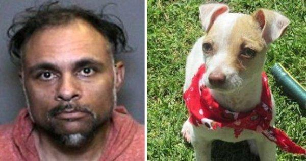 Absurdo! Cachorrinho é encontrado sob efeito de metanfetamina ...