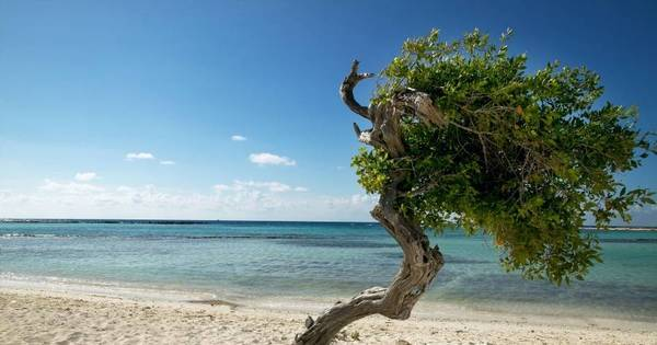 Areia branca e mar turquesa! Aruba coleciona prêmios de turismo ...