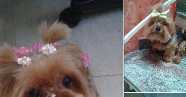 Bandidos invadem casa na Mooca e sequestram cachorra doente ...