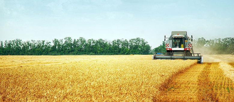 Do campo para a sua mesa: trigo percorre 2.500 km e leva dez dias de navio para virar pão