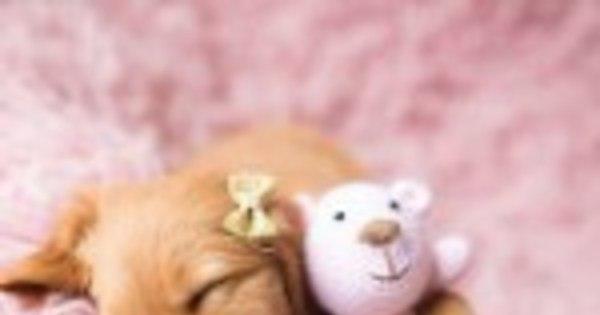 Newborn para PETS - Casa e Família - R7 Eu ele e as Crianças