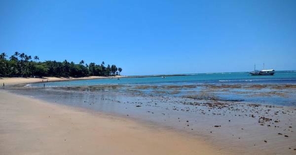 5 motivos para ir à Praia do Forte com filhos - Casa e Família - R7 ...