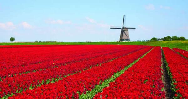 Holanda e Bélgica: Um cruzeiro para ver tulipas e muito mais. Agora ...