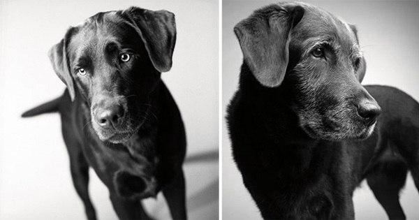 Veja um ensaio tocante sobre o envelhecimento de cães - Jovem ...