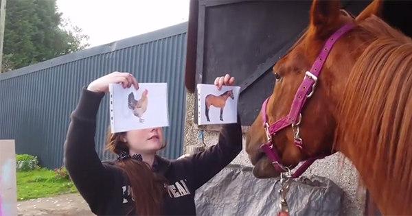 Cavalo nada burro sabe a diferença entre ele e um frango - Notícias ...