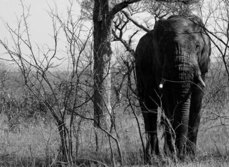 Veja os animais maravilhosos<br />que vivem na África do Sul