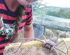 Aranha monstruosa dá as caras em fazenda e toca o terror na web