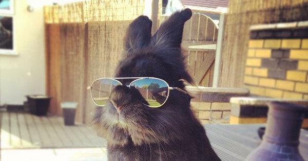Coelho com óculos 3