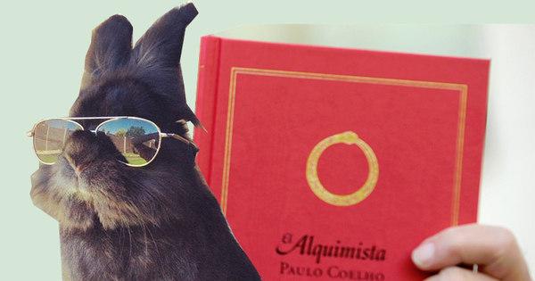 Coelho com óculos 47