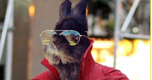 Coelho com óculos 4