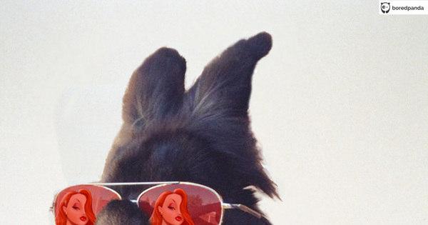 Coelho com óculos 9