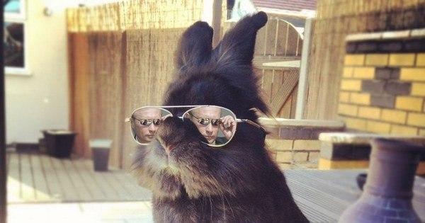 Coelho com óculos 33