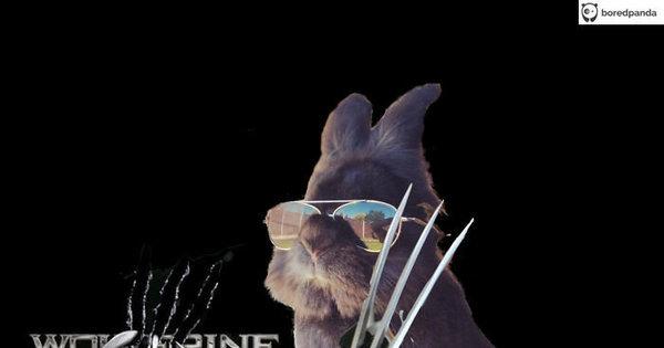 Coelho com óculos 43