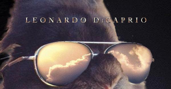 Coelho com óculos 14