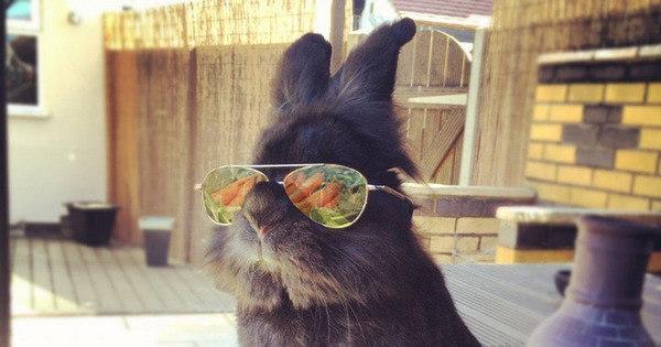 Coelho com óculos 23