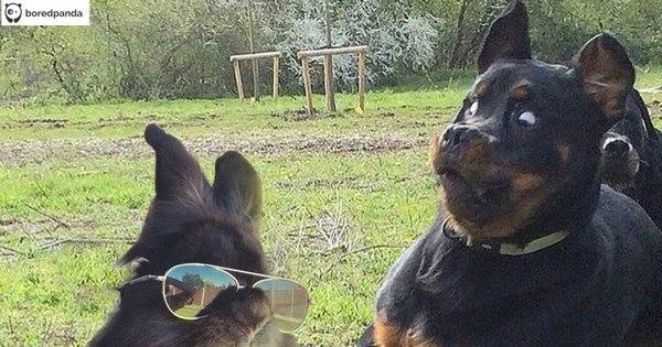 Coelho com óculos 28