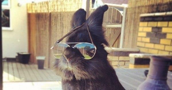 Coelho com óculos 18