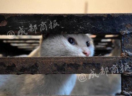 'Defensor' abatia gatos e vendia carne como se fosse de coelho