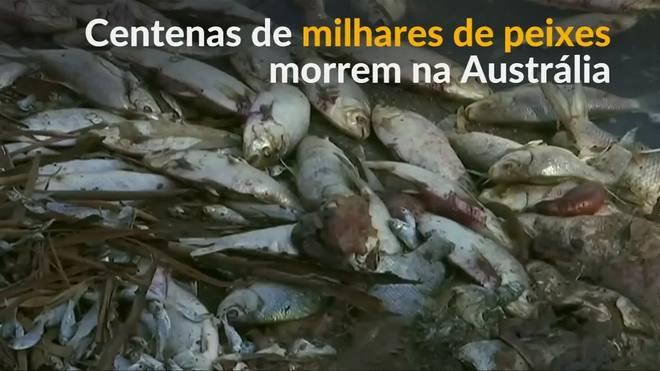 Centenas de milhares de peixes morrem na Austrália