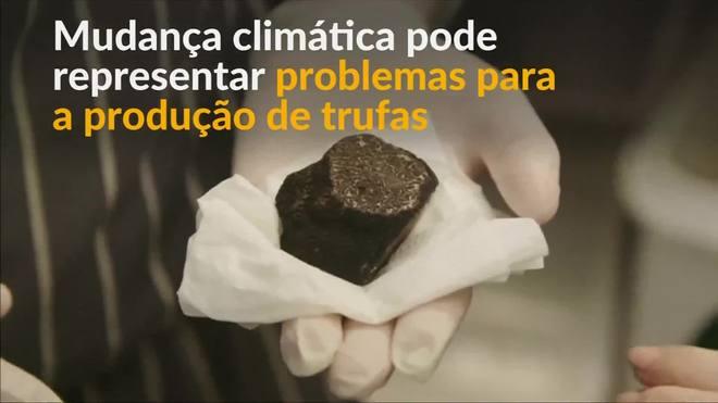 Mudança climática causa problemas para a produção de trufas