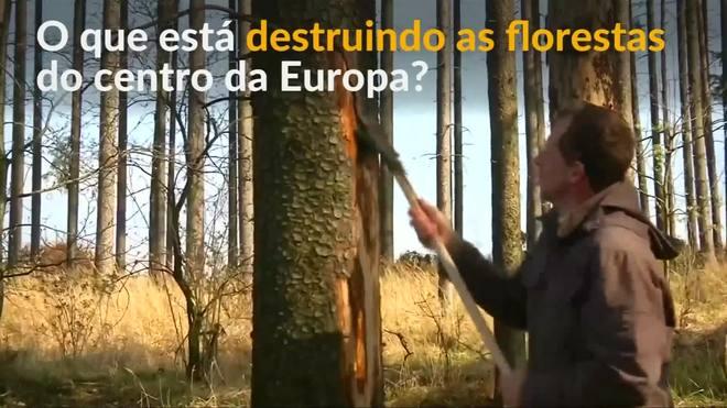 Infestação de besouros ameaça florestas do centro da Europa