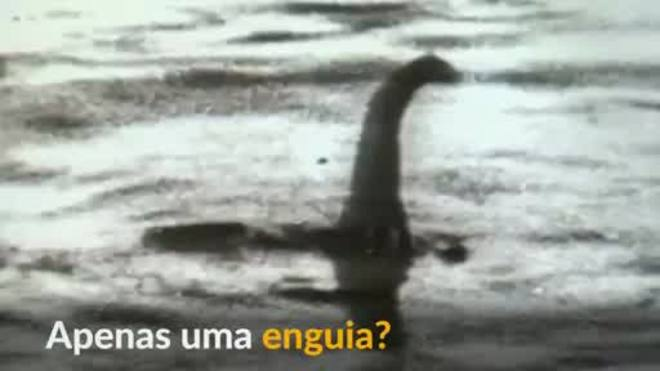 Monstro do lago Ness pode ser apenas enguia gigante